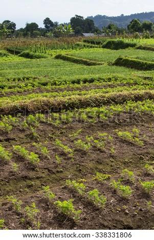 Harvest fresh organic carrots on the ground - stock photo
