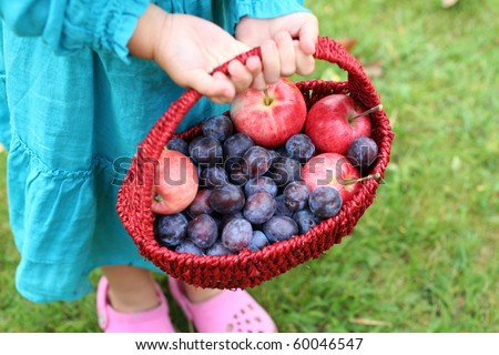 Harvest of fresh fruits in the basket - stock photo