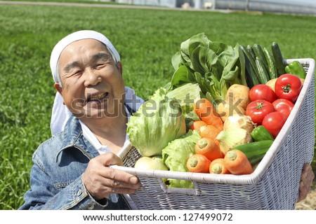 Harvest of vegetables - stock photo