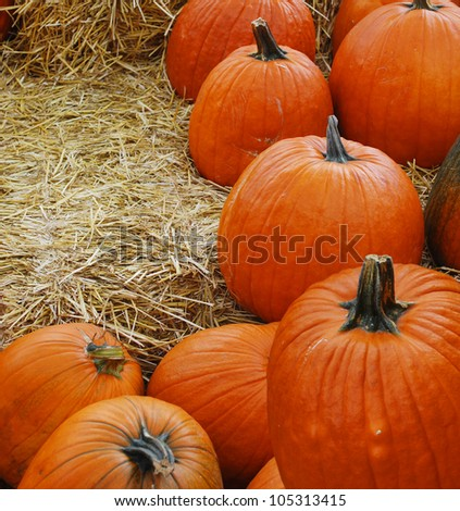Harvest pumpkin background