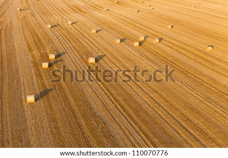 harvest rolls - stock photo