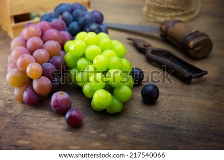 Harvest season Grapes. Fresh harvested red, black and white (green) grapes on a table.  - stock photo