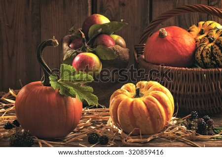 Harvest setting with pumpkins, gourds, orchard apples and blackberry fruits  - stock photo