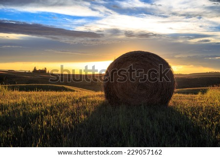 harvest time - stock photo
