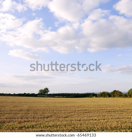 Harvested Farmland with Beautiful Sky Above