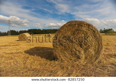 Harvested grain field