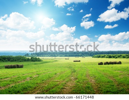 harvested grass in roll and perfect sunny day - stock photo