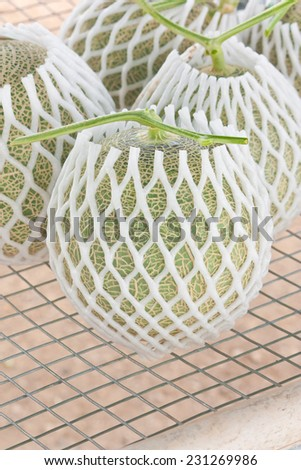 Harvested Japanese musk melons packed with protective foam net - stock photo