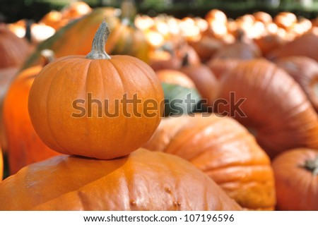 Harvested pumpkins for sale in the Autumn - stock photo