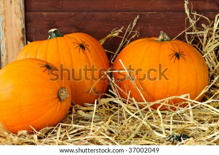 Harvested pumpkins in straw covered barn with spiders