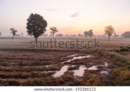 harvested rice field, natural agriculture in Thailand - stock photo