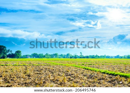 harvested rice field with blue mountains background - stock photo