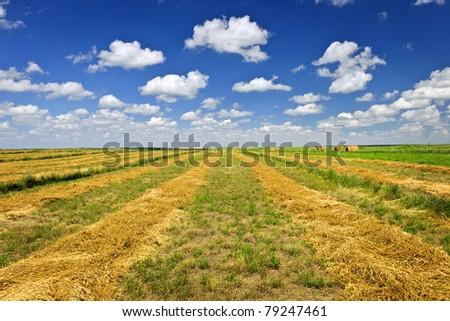 Harvested wheat on farm field in Saskatchewan, Canada - stock photo