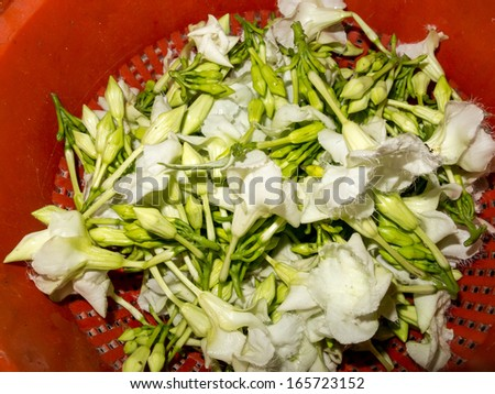 Harvested White Edible Loroco Flower Buds and Blossoms - stock photo