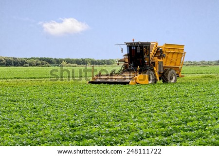 Harvester collecting the crop for the season
