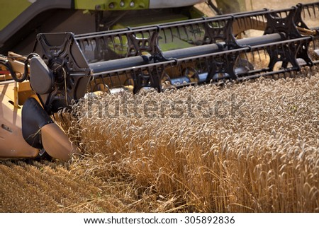Harvester collects ripe wheat in the field / Grain harvesting combine - stock photo