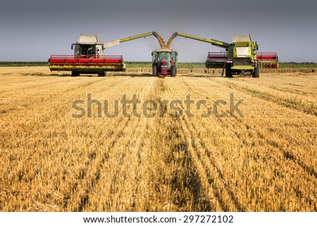 Harvesters loading truck NOTE models are unknown and there are no visible trademarks  - stock photo