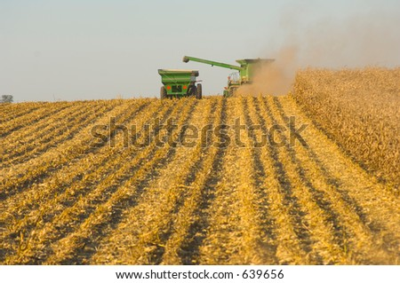harvesting a corn field - stock photo