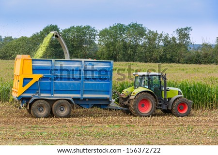Harvesting Autumn Maize - stock photo