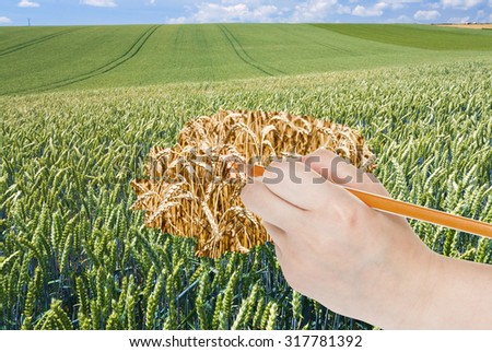 harvesting concept - hand with pencil draws ripe ears of wheat in green field - stock photo
