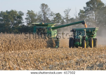 harvesting corn - stock photo