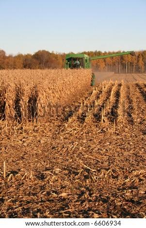 harvesting corn crop - stock photo