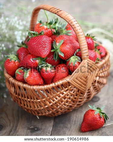Harvesting fresh perfect strawberries. Basket with juicy strawberries