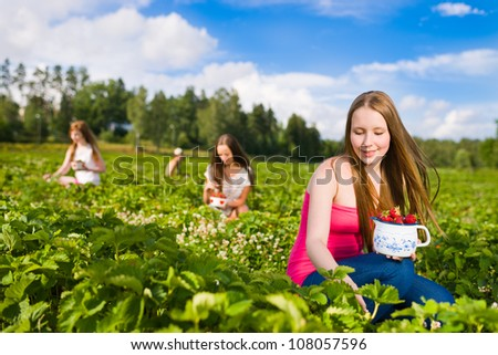Harvesting girl on the strawberry field. Focus on her and behind group of girls, horizontal format - stock photo