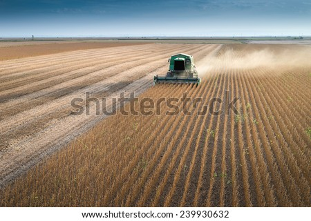 Harvesting of soybean field with combine - stock photo