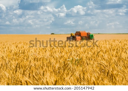 Harvesting of wheat  on the background field and blue sky with clouds