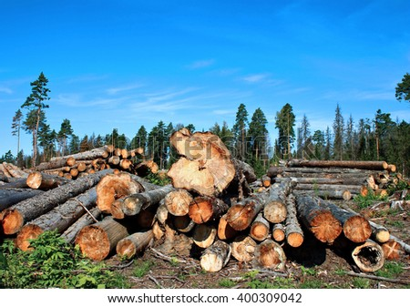 Harvesting timber logs in a forest in Russia - stock photo