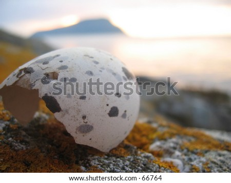 Hatched sea gal egg - stock photo