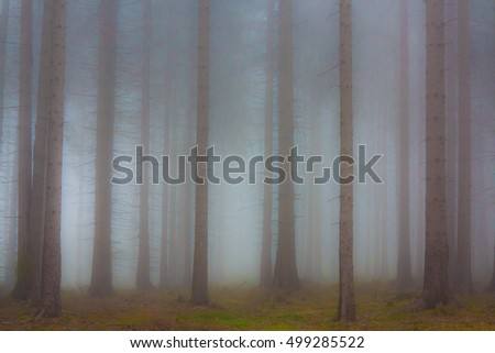 Haunted forest in fog