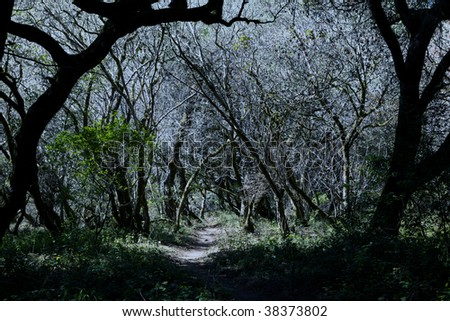 Haunted Halloween Forrest - stock photo