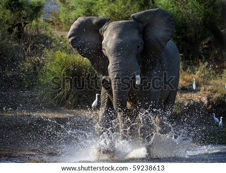 Have angered. The river Zambezi. Zambia. Africa - stock photo
