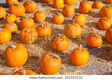 Having fun on pumpkin patch on sunny Sunday. - stock photo