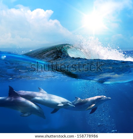 hawaiian beautiful dolphins playing under ocean breaking surfing wave - stock photo