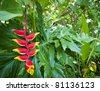 Hawaiian Flowers 3 - stock photo