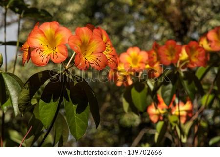Hawaiian Flowers - stock photo