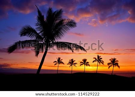 Hawaiian palm tree silhouette sunset on Big Island - stock photo