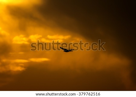 hawk flying red sky long legged buzzard and storm - stock photo