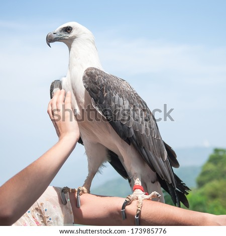 Hawk perched on the arm - stock photo