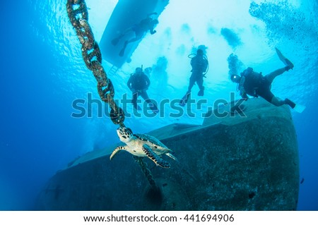 Hawksbill Turtle cruising past divers, Grand Cayman