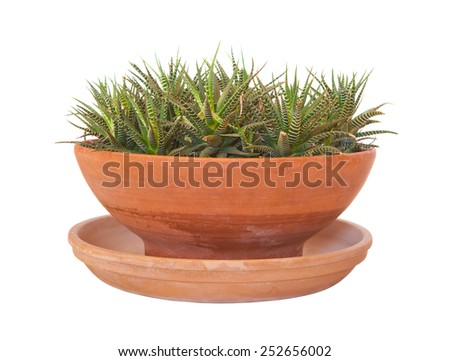Haworthia attenuata indoor house plant in terracotta pot isolated on white - stock photo