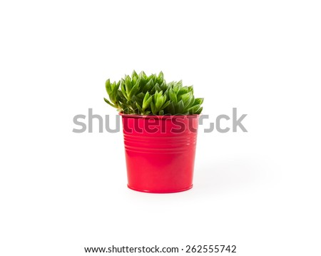 Haworthia succulent plant in vivid pot on white background with shadow - stock photo