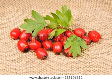 Hawthorn berries on a burlap background