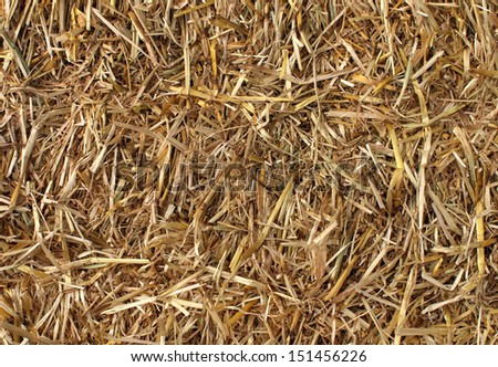 Hay background as a front view of a bale of hay as an agriculture farm and farming symbol of harvest time with dried grass straw as a bundled tied haystack. - stock photo