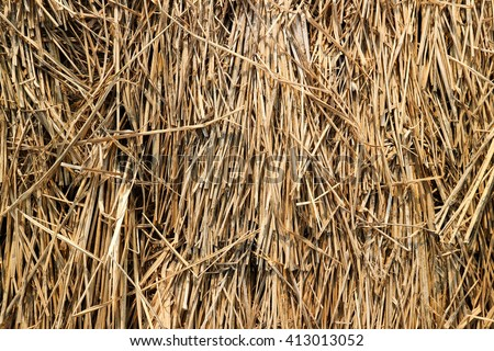 Hay background closeup in color. Fodder for livestock and construction material.Dry rice. - stock photo