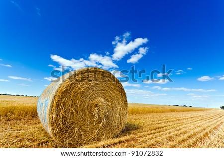 Hay bale in a field under a blue sky - stock photo