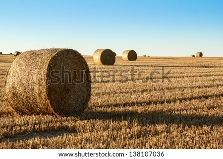 hay bale in the foreground of orange rural field with blue sky - stock photo